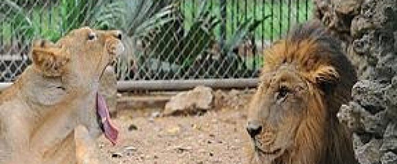 Karachi Zoo In Garden Under Threat
