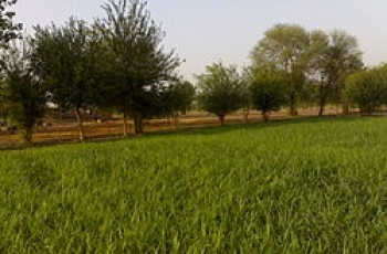 Bhawana Qabristan Scandal