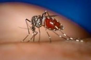 Dengue Fever In Pakistan 2012