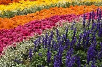 flower show poster