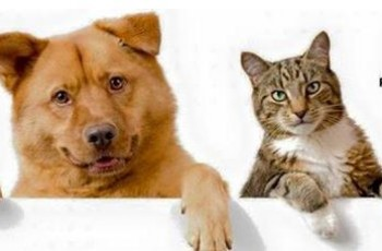 cat and dog show