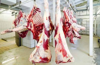 slaughter meat