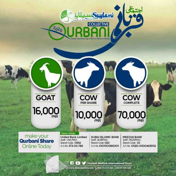 saylani welfare qurbani rates